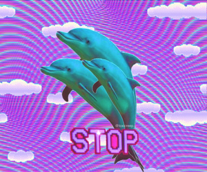 stop, tumblr, and dolphin image