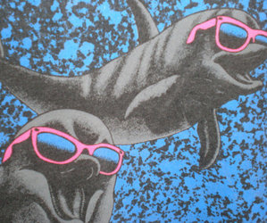 dolphin, sunglasses, and blue image