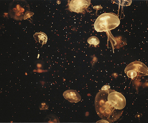 animal, disposable, and jellyfish image
