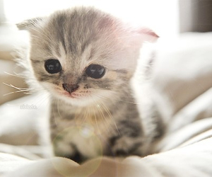 adore, kitty, and cute image