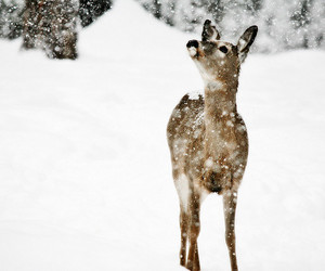 adorable, deer, and snow image