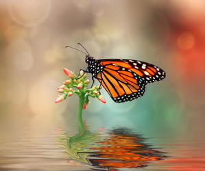 butterfly and monarch butterfly image