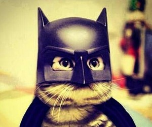 cat and batman image