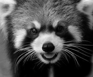 animal, black and white, and smile image