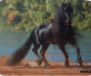 horse, animal, and beauty image
