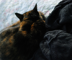 cat, tortie, and cats image