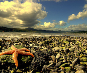 ocean and starfish image
