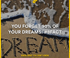 Dream, fact, and forget image