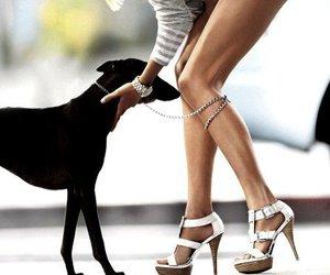 dog, fashion, and girly image