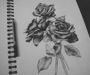 rose, art, and drawing image