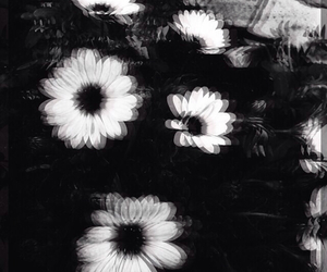 flowers, black and white, and grunge image