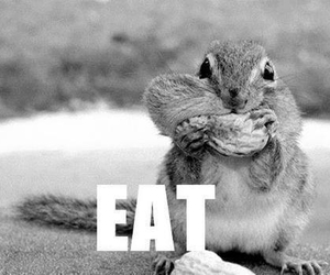 eat, squirrel, and food image