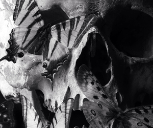 skull, butterfly, and black and white image
