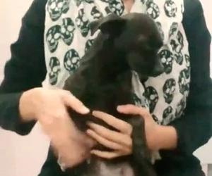 cachorro, dog, and kawaii image
