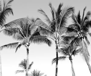 black and white, paradise, and summer image