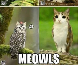 owl, cat, and funny image