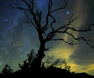 stars, tree, and dark image