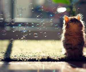 alone, bubble, and eyes image