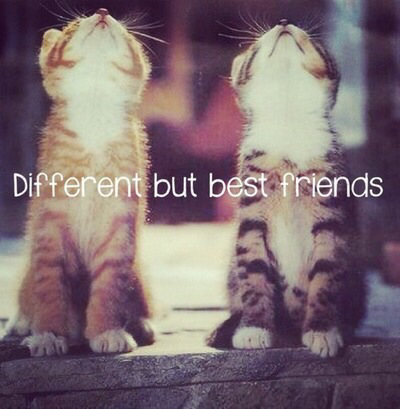 best friends, cat, and picture image