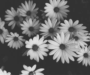 and, flowers, and black image