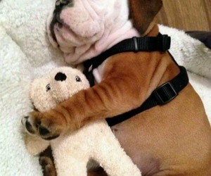 puppy and teddy image