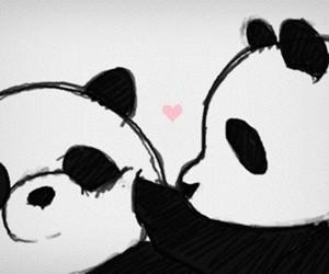 panda, kawaii, and animal image
