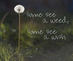 wish, quotes, and weed image