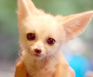 adorable, animal, and fox image