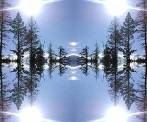 nature, reflection, and symmetry image