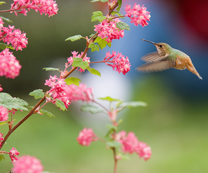 bird, flowers, and pretty image