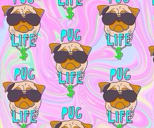 dog, pug, and life image