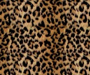 leopard and leopardprintbackground image