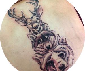 beer, deer, and woods image