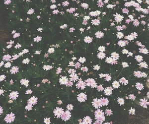flowers, pink, and hipster image