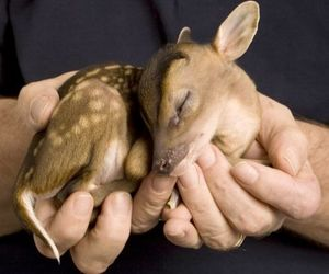 bambi and deer image