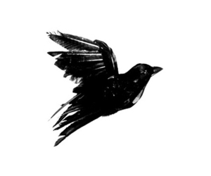 bird, art, and black image