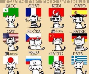 cat, world, and neko image