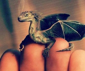 dragon and harry potter image