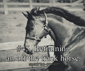 horse, special, and off the track image