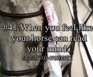 connection, horse, and mind reading image