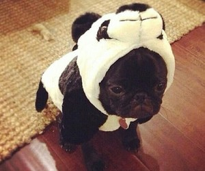 dog, funny, and panda image