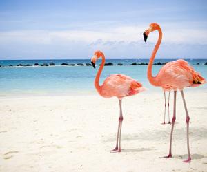 beach, flamingo, and pink image