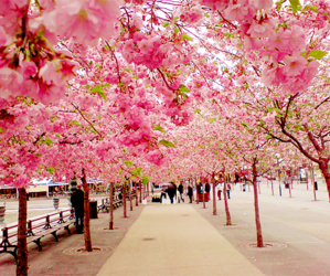 beautiful, pink, and scenery image