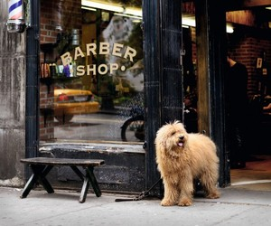 dog, photography, and shop image