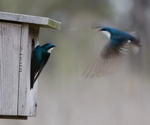 bird, birdhouse, and birds image
