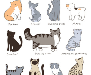 cat, persian, and ragdoll image