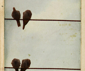 birds, sky, and wire image