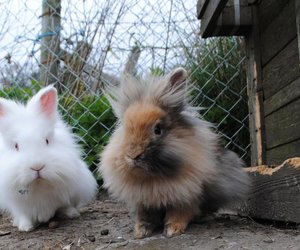 adorable, animals, and bunnies image