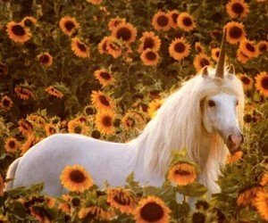 <3, flowers, and horse image
