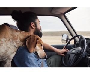 dog, car, and man image